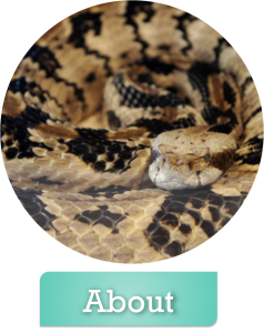 About Texas Snake Initiative
