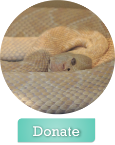Donate to Texas Snake Initiative