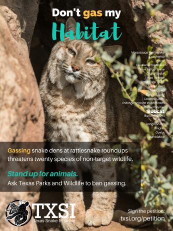 bobcat-poster-18x24