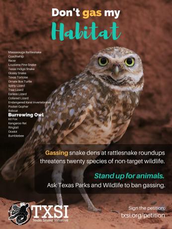 burrow-owl-poster-18x24
